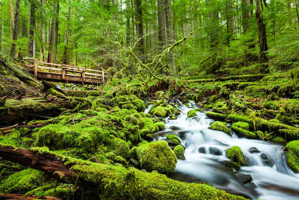 Olympic National Park, Washington State / Shutterstock.com