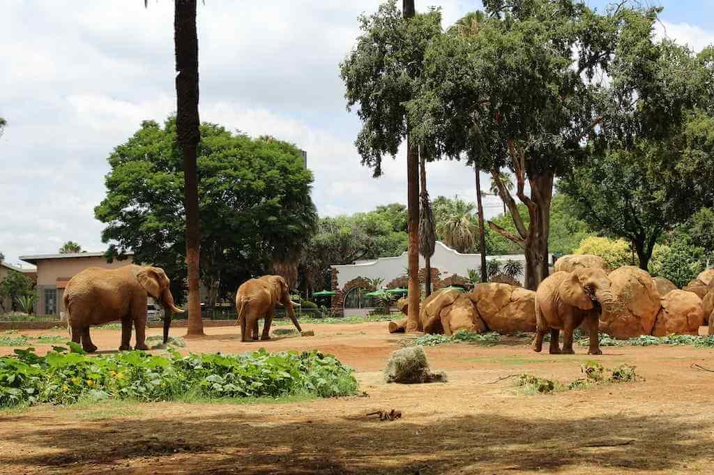 Pretoria Zoo, South Africa by Vladimira Pufflerova/Shutterstock
