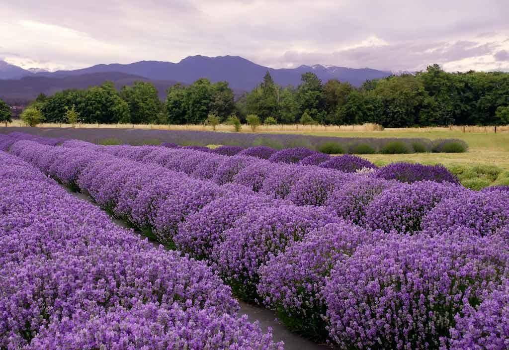 Sequim, Washington State / Shutterstock.com