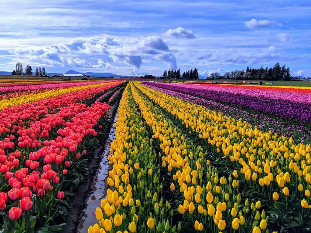 Skagit Valley, Washington State / Shutterstock.com