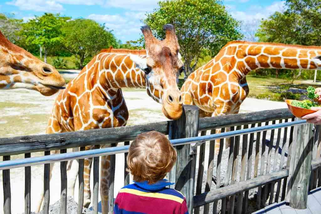 Zoo Miami, Miami, by By Romrodphoto/Shutterstock