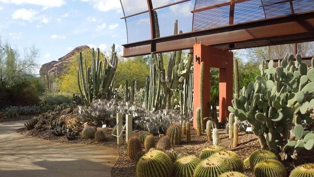 Desert Botanical Gardens, Phoenix by Simeon87 Wikimedia
