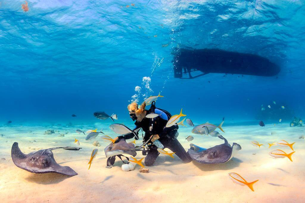 SCUBA diver playing with Stingrays in shallow water, Bermuda