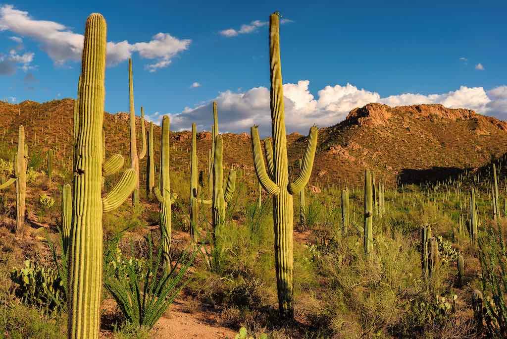 Saguaro National Park near Tucson, Arizona.