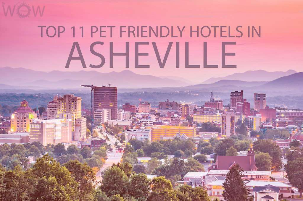 Top 11 Pet Friendly Hotels In Asheville NC