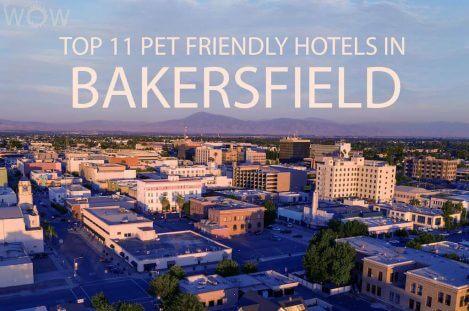 Top 11 Pet Friendly Hotels In Bakersfield