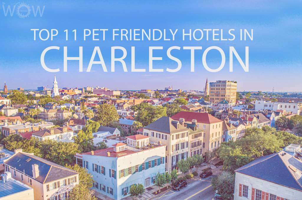 Top 11 Pet Friendly Hotels In Charleston SC