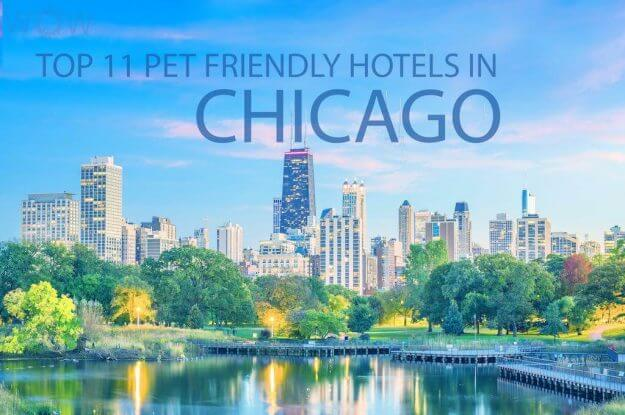 Top 11 Pet Friendly Hotels In Chicago