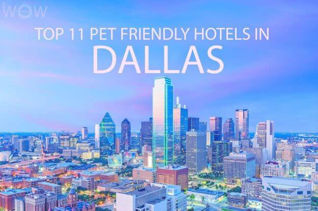 Top 11 Pet Friendly Hotels In Dallas