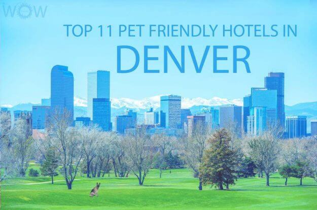 Top 11 Pet Friendly Hotels In Denver