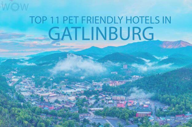 Top 11 Pet Friendly Hotels In Gatlinburg TN