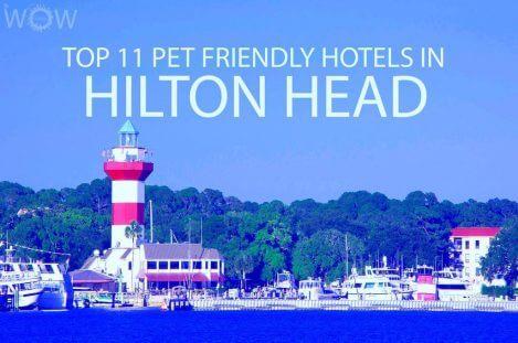 Top 11 Pet Friendly Hotels In Hilton Head