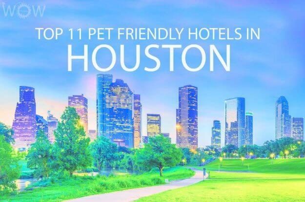 Top 11 Pet Friendly Hotels In Houston