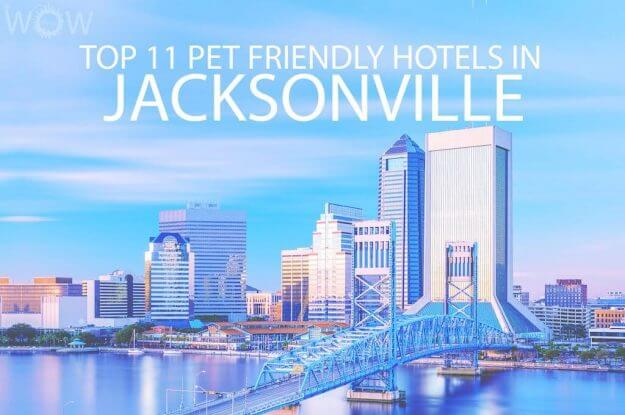 Top 11 Pet Friendly Hotels In Jacksonville FL