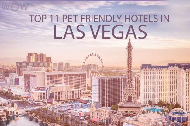 Top 11 Pet Friendly Hotels In Las Vegas