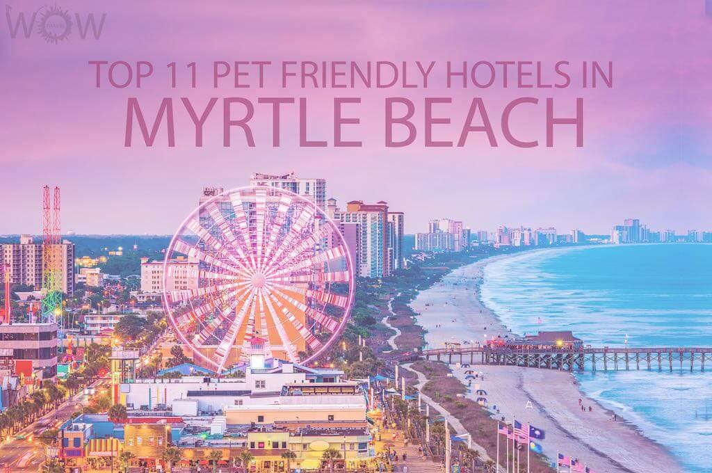 Top 11 Pet Friendly Hotels In Myrtle Beach