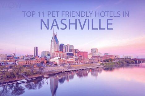 Top 11 Pet Friendly Hotels In Nashville TN