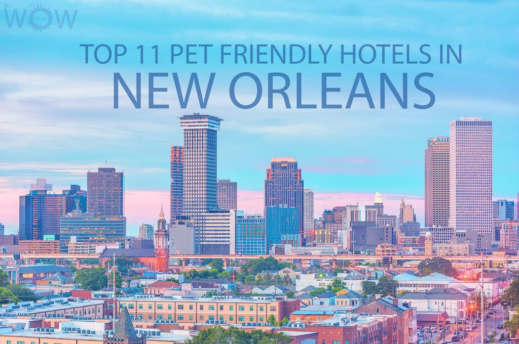Top 11 Pet Friendly Hotels In New Orleans