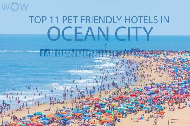 Top 11 Pet Friendly Hotels In Ocean City MD