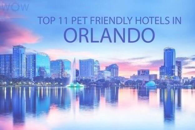 Top 11 Pet Friendly Hotels In Orlando