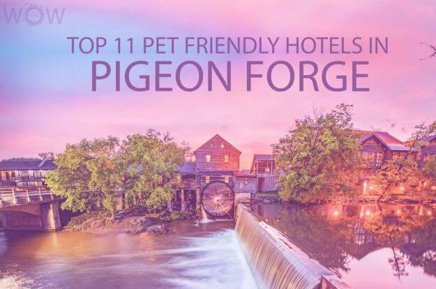 Top 11 Pet Friendly Hotels In Pigeon Forge