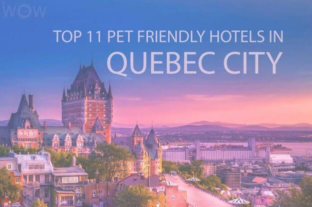 Top 11 Pet Friendly Hotels In Quebec City