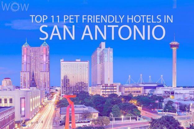 Top 11 Pet Friendly Hotels In San Antonio