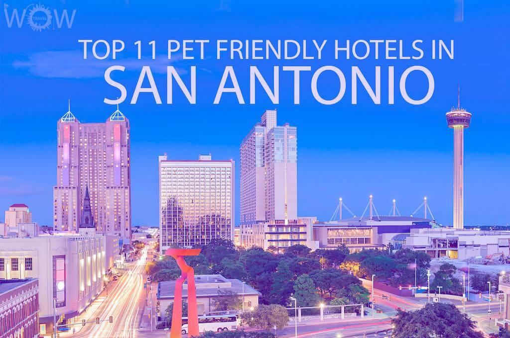 Top 11 Pet Friendly Hotels In San Antonio