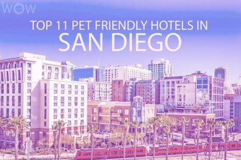 Top 11 Pet Friendly Hotels In San Diego