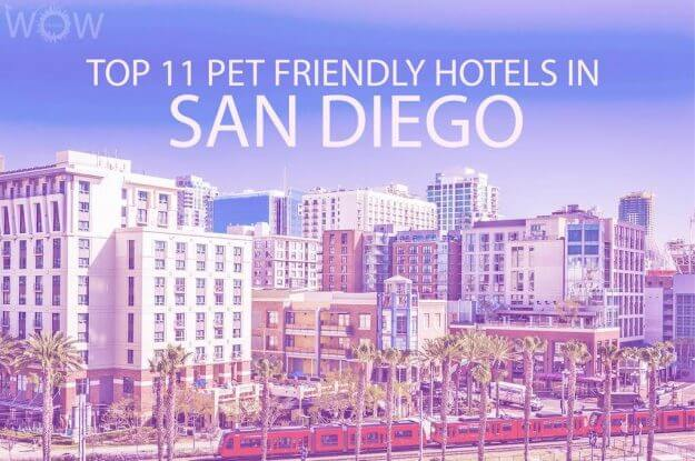 Top 11 Pet Friendly Hotels In San Diego