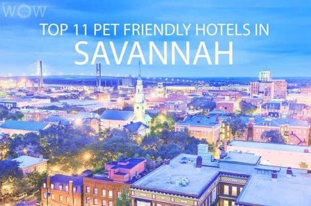 Top 11 Pet Friendly Hotels In Savannah GA