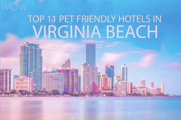 Top 11 Pet Friendly Hotels In Virginia Beach