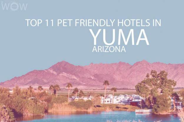 Top 11 Pet Friendly Hotels In Yuma, Arizona