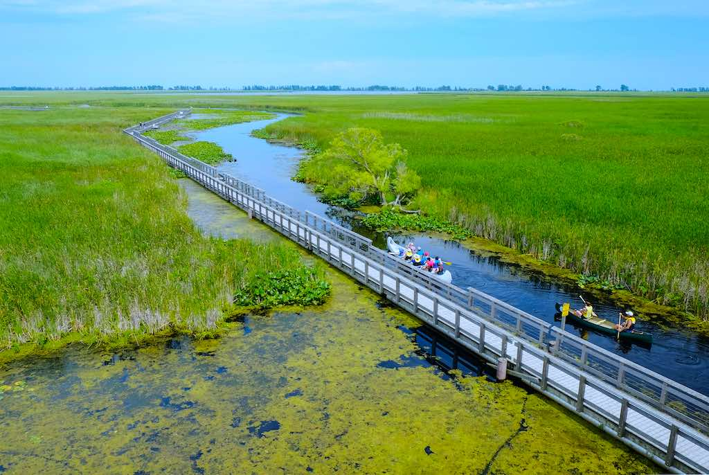 people canoeing along the wooden boardwalk at Point Pelee National Park marsh, southwestern Ontario, Canada
