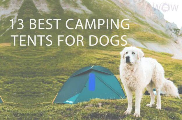 13 Best Camping Tents For Dogs
