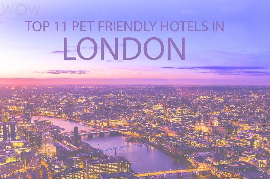 Top 11 Pet Friendly Hotels In London