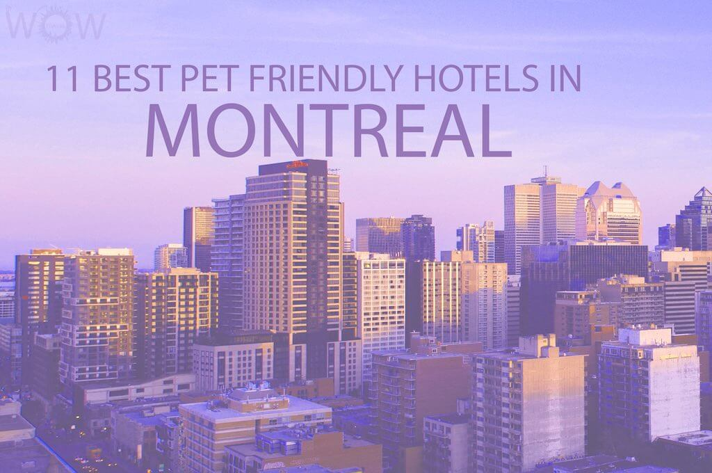 Top 11 Pet Friendly Hotels In Montreal