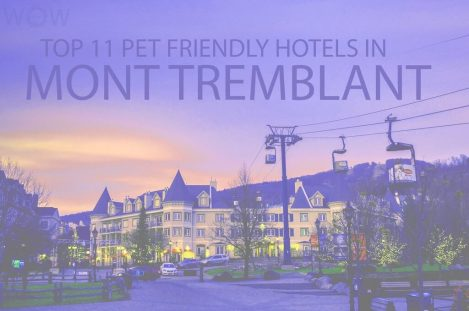 Top 11 Pet Friendly Hotels Mont in Tremblant