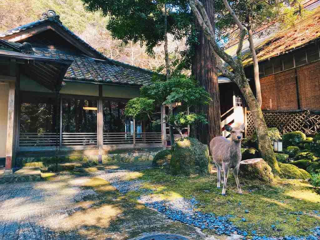 Tsukihitei Ryokan, Nara - by Booking.com