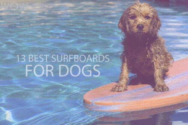 13 Best Surfboards for Dogs