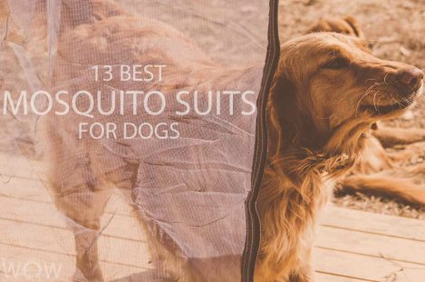 13 Best Mosquito Suits For Dogs