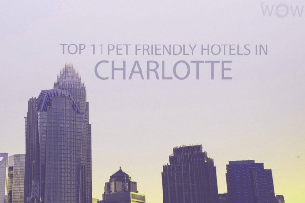 Top 11 Pet Friendly Hotels In Charlotte, North Carolina