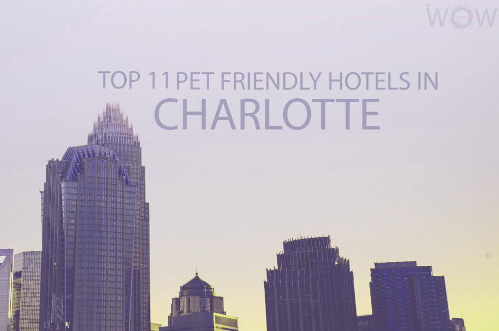 Top 11 Pet Friendly Hotels In Charlotte, North Carolina