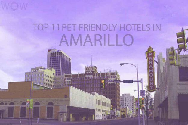 Top 11 Pet Friendly Hotels in Amarillo
