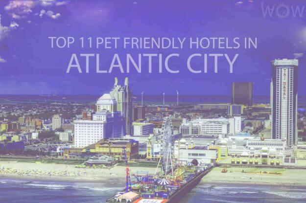 Top 11 Pet Friendly Hotels in Atlantic City
