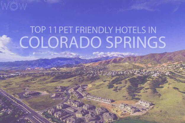Top 11 Pet Friendly Hotels in Colorado Springs