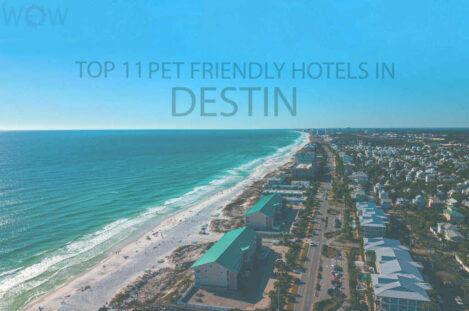 Top 11 Pet Friendly Hotels in Destin