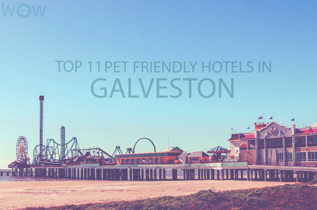Top 11 Pet Friendly Hotels in Galveston