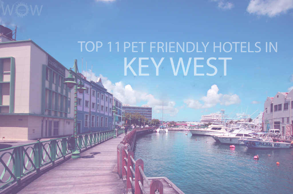 Top 11 Pet Friendly Hotels in Key West