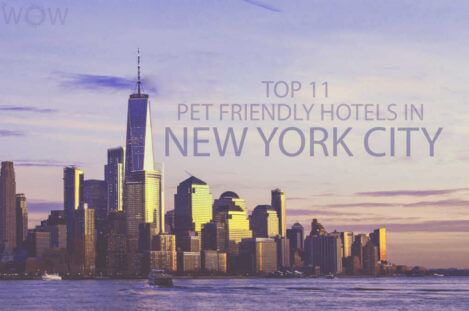 Top 11 Pet Friendly Hotels in New York City